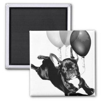Birthday French Bulldog magnet