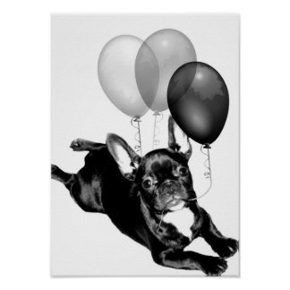 Birthday French Bulldog poster