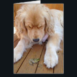 """Birthday golden retriever with frog card<br><div class=""""desc"""">golden retriever with green frog on wood</div>"""