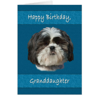 Birthday, Granddaughter , Shih Tzu Dog Card