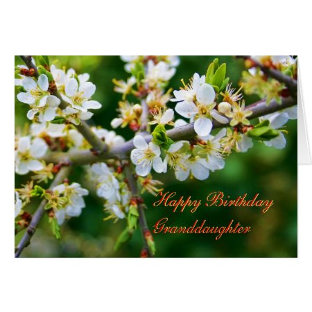 Birthday Granddaughter Sun-Dappled Spring Hawthorn Card