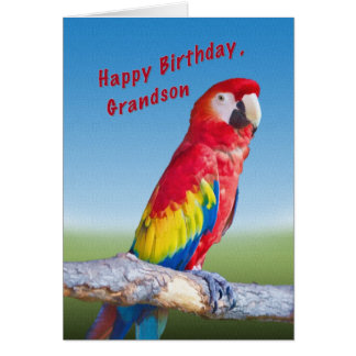 Birthday, Grandson, Macaw Parrot Greeting Card