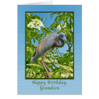 Birthday,  Grandson, Tricolored Heron in a Tree Card