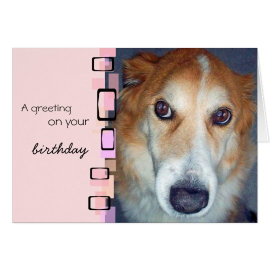 Birthday Greeting Border Collie Card