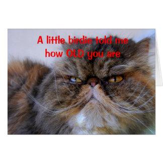 Birthday Humor Calico Persian Kitty Card