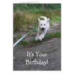 Birthday Humor with Cute Running Goldendoodle Pup Greeting Card