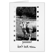 Birthday Humour - Cows Card