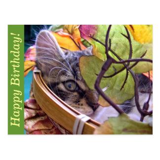 Birthday Kitty Cat Kitten Peaking, Leaves, One Eye Postcard