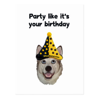 Birthday Party Dog Postcard