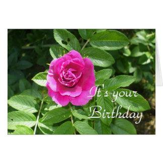 Birthday Rose Card