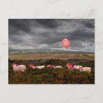 Birthday sheep postcard