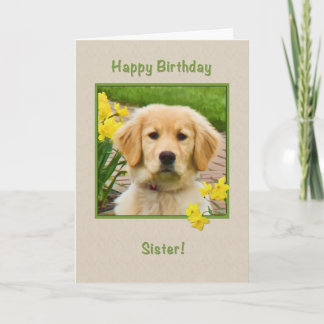 Birthday, Sister, Golden Retriever Dog, Daffodils Card