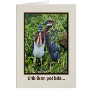 Birthday, Sister, Two Tricolored Heron Chicks Card