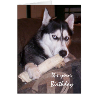 Birthday, Something for you, Humor with Dog Card