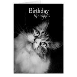 Birthday Thoughts from a Cat's Perspective (card) Card