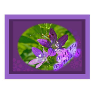 Birthday Venus Looking Glass Wildflower Floral Postcard