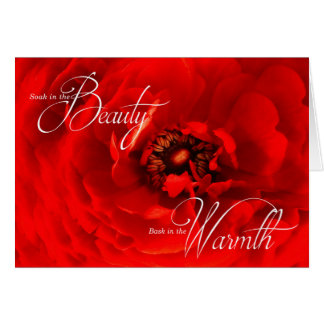 Birthday - Vibrant Red Macro Flower Photograph Card