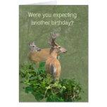 Birthday Whitetail Deer Buck & Doe Greeting Cards