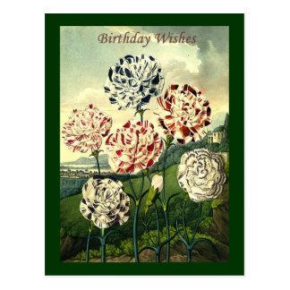Birthday Wishes - Striped Carnation Postcard