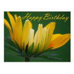 Birthday - Yellow Daisy Postcard