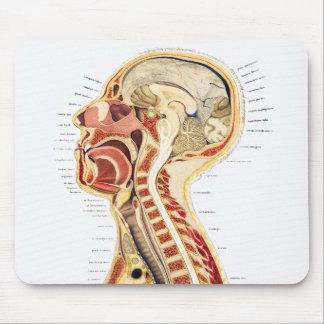 Bisección humana científica médica de la anatomía mouse pads