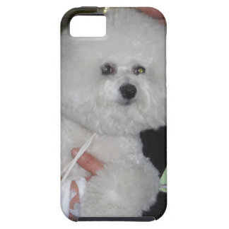 Bishon Frise iPhone5 Case