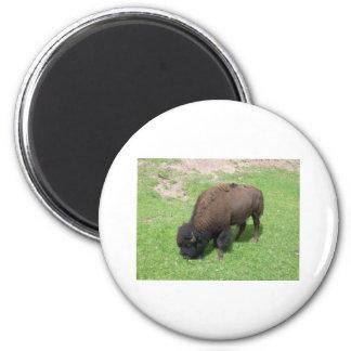 Bison 2 Inch Round Magnet