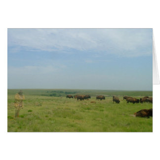 """Bison and """"ghost"""" greeting cards"""