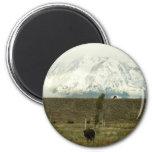 Bison at Grand Teton National Park 2 Inch Round Magnet