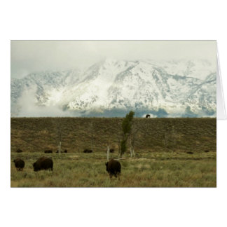 Bison at Grand Teton National Park Photography Card