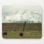 Bison at Grand Teton National Park Photography Mouse Pad