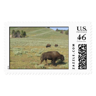 Bison at Yellowstone National Park Postage Stamp