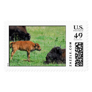 Bison Baby Postage