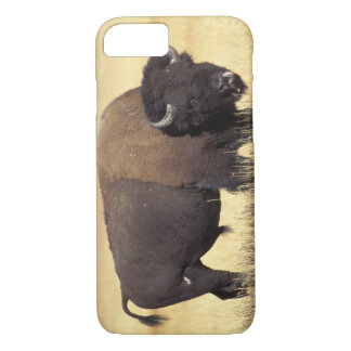 bison, Bison bison, bull in Yellowstone National iPhone 7 Case