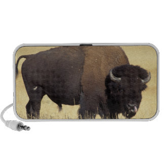 bison, Bison bison, bull in Yellowstone National PC Speakers