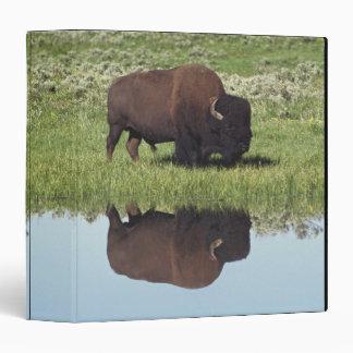 Bison (Bison Bison) On Grassy Meadow Binder