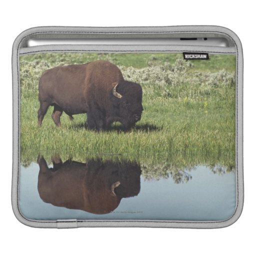 Bison (Bison Bison) On Grassy Meadow Sleeve For iPads