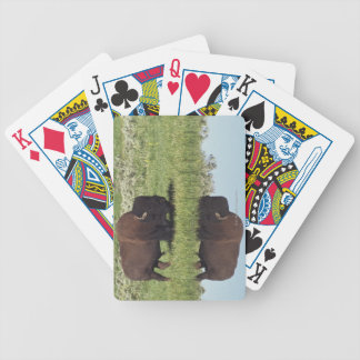 Bison (Bison Bison) On Grassy Meadow Bicycle Card Deck