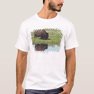 Bison (Bison Bison) On Grassy Meadow T-Shirt