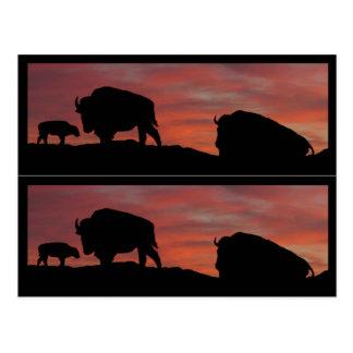 Bison book markers postcard