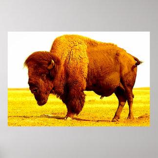 Bison Buffalo American Art Poster