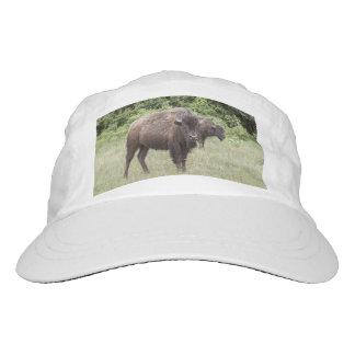 bison buffalo animal native American Indian Headsweats Hat
