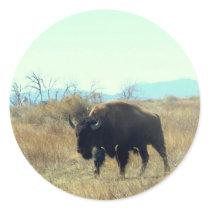 Bison Buffalo Bull Sticker