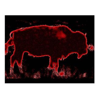 Bison Buffalo Postcard