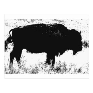 Bison - Buffalo Postcard