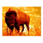 Bison / Buffalo Postcards