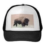 Bison / Buffalo Trucker Hat