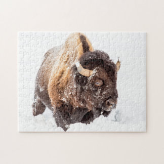 Bison bull foraging in deep snow jigsaw puzzle