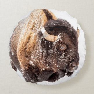Bison bull foraging in deep snow round pillow