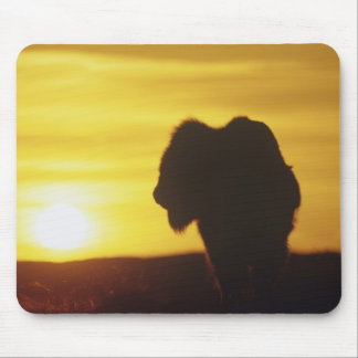 Bison bull sihouette at Theodore Roosevelt Mouse Pad